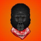 Gorilla hoofdgradiënten Op een wit Royalty-vrije Stock Foto