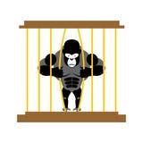 Gorilla im Käfig im Zoo Starkes furchtsames wildes Tier in der Gefangenschaft stock abbildung
