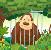 A gorilla inside a cage at the forest Royalty Free Stock Photography