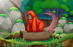 A gorilla at the jungle Stock Images