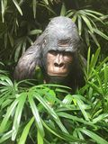 Gorilla in Jungle. Scary gorilla peeking out of foliage royalty free stock photo