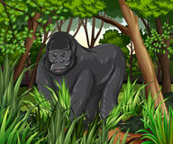 Gorilla living in the jungle Royalty Free Stock Photos