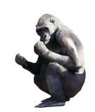 Gorilla. Lokalisiert auf Weiß Lizenzfreie Stockfotografie