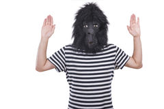 Gorilla man. Isolated on a white background Stock Photography