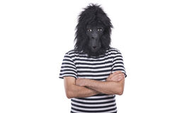 Gorilla man. Isolated on a white background Stock Images