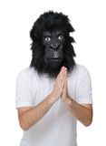 Gorilla man Stock Photo