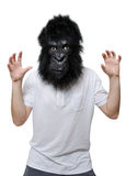 Gorilla man. Man with a gorilla mask, isolated on a white background in a scary position Royalty Free Stock Photography