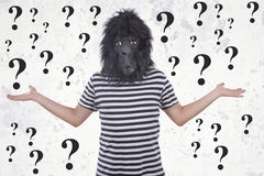 Gorilla man thinking. With question marks Stock Image