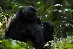 Gorilla met baby Royalty-vrije Stock Afbeelding