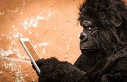 Gorilla met Tablet Stock Fotografie