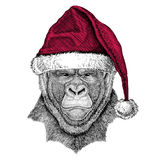 Gorilla, monkey, ape Frightful animal Christmas illustration Wild animal wearing christmas santa claus hat Red winter. Christmas illustration Wild animal wearing Royalty Free Stock Photography