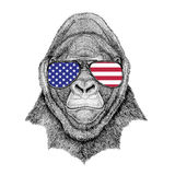 Gorilla, monkey, ape Frightful animal Hand drawn illustration fo. Wild animal wearing glasses with USA flag United states of America flag Zoo animal Stock Image