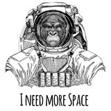 Gorilla, monkey, ape Frightful animal Astronaut. Space suit. Hand drawn image of lion for tattoo, t-shirt, emblem, badge. Gorilla, monkey, ape Frightful animal Royalty Free Stock Photo