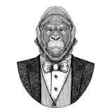 Gorilla, monkey, ape Frightful animal Hipster animal Hand drawn illustration for tattoo, emblem, badge, logo, patch, t. Gorilla, monkey, ape Frightful animal Royalty Free Stock Photo