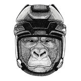Gorilla, monkey, ape Frightful animal Hockey image Wild animal wearing hockey helmet Sport animal Winter sport Hockey. Hockey image Wild animal wearing hockey Royalty Free Stock Photos