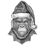 Gorilla, monkey, ape Frightful animal wearing christmas hat New year eve Merry christmas and happy new year Zoo life. Wild animal wearing christmas hat New year Stock Photography