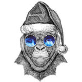 Gorilla, monkey, ape Frightful animal wearing christmas hat New year eve Merry christmas and happy new year Zoo life. Wild animal wearing christmas hat New year Royalty Free Stock Photos