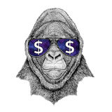 Gorilla, monkey, ape Frightful animal wearing glasses with dollar sign Illustration with wild animal for t-shirt, tattoo. T-shirt print with wild animal wearing Royalty Free Stock Images