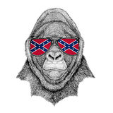 Gorilla, monkey, ape Frightful animal wearing glasses with National flag of the Confederate States of America Usa flag. Wild animal for patch or tattoo or logo Royalty Free Stock Image