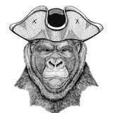 Gorilla, monkey, ape Frightful animal wearing pirate hat Cocked hat, tricorn Sailor, seaman, mariner, or seafarer. Wild animal wearing pirate cocket hat Royalty Free Stock Photo