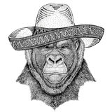 Gorilla, monkey, ape Frightful animal Wild animal wearing sombrero Mexico Fiesta Mexican party illustration Wild west. Wild animal wearing sombrero Mexico Fiesta Royalty Free Stock Photo
