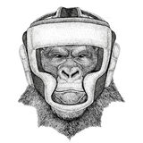 Gorilla, monkey, ape Wild boxer Boxing animal Sport fitness illutration Wild animal wearing boxer helmet Boxing. Wild boxer Boxing animal Sport fitness Stock Image
