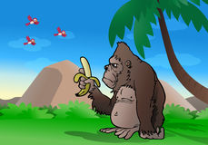 Gorilla observing banana. Illustration of a cartoon silver-back gorilla observe banana and ready to eat it on nature background Stock Images
