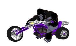 Gorilla op purpere fiets Stock Foto