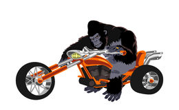 Gorilla on orange bike Royalty Free Stock Photo