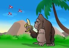 Gorilla osservando banana Immagini Stock