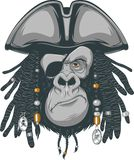 Gorilla pirate. Gorilla harsh pirate, vector illustration Royalty Free Stock Image