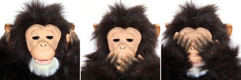 Gorilla Portraits present popular saying Stock Photos