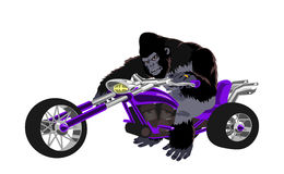 Gorilla on purple bike Stock Photo