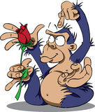 Gorilla with Rose Royalty Free Stock Images