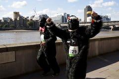 Gorilla run Stock Photos