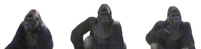 Gorilla series. Gorilla-the same one in 3 angles isolated on white Stock Photos