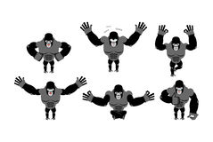 Gorilla set  poses. Expression of Emotions monkey. Wild beast an Royalty Free Stock Images
