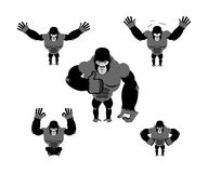 Gorilla set  poses. Expression of Emotions monkey. Wild beast an Stock Photo