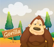 A gorilla beside a signboard Stock Photos
