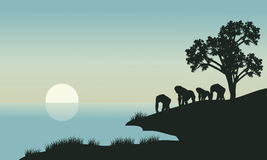 Gorilla silhouette in lake Royalty Free Stock Photography