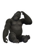 Gorilla sitting and scratching, ape  on white background. Gorilla sitting and scratching, monkey  on white background Stock Photo