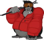 Gorilla skier Royalty Free Stock Photos