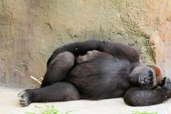 Gorilla-Stillstehen Lizenzfreie Stockfotografie