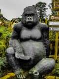 A gorilla. A strong, trustworthy creature known for its great strength and fierce looks stock photography