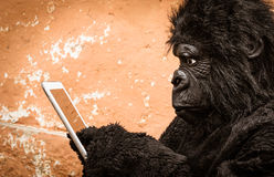 Gorilla with Tablet. Funny profile of a tecnological gorilla interacting with a tablet Stock Photography