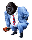 A gorilla tired from business Stock Image