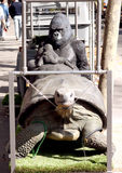 Gorilla and turtle Stock Image