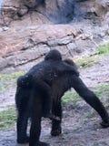Gorilla und ihr Schätzchen lizenzfreie stockfotos