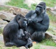Gorilla und ihr Schätzchen stockbilder