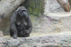 Gorilla und Schätzchen Lizenzfreie Stockfotografie
